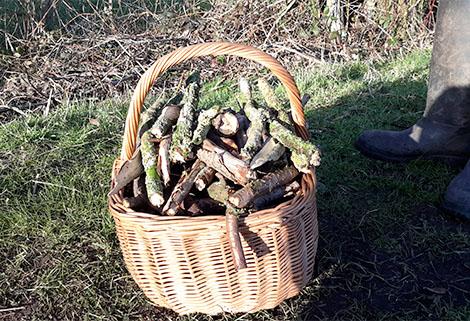 basket of sticks