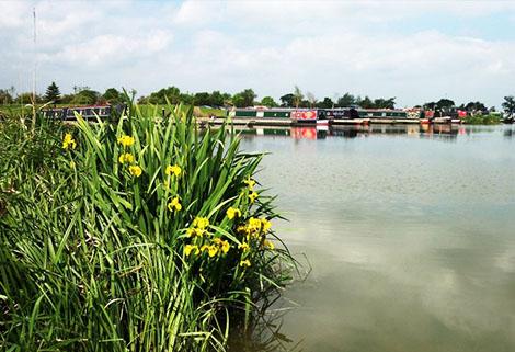 Overwater Marina with irises