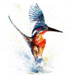 kingfisher by Lesley Pearson