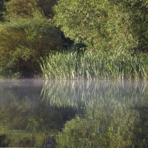 misty waters, Staffs & Worcs canal