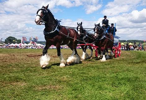 Horse Parade, 2017