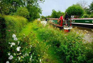 canal habitat along towpath